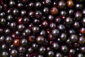 acai-berry  lr