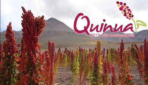 quinoa 2013 poster