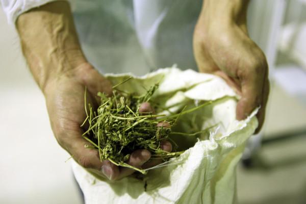 травы сибирские