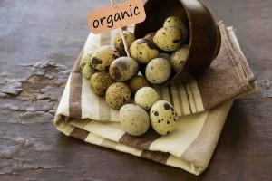 organic eggs lr