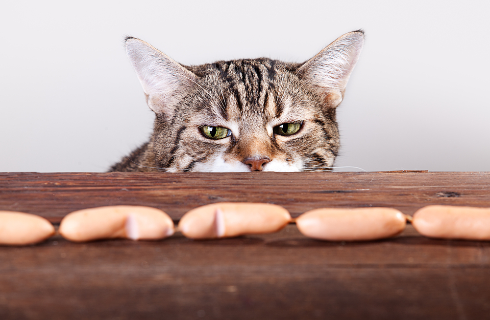 Кошки и колбаса картинки