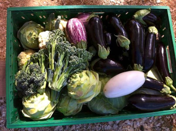 Vegetables Nikola Lenivets