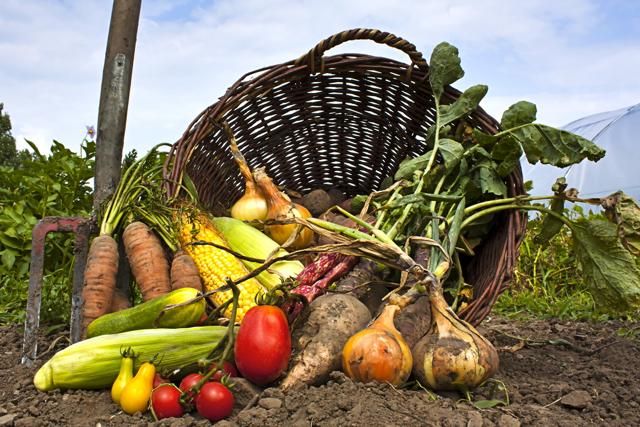 Vegetables in a basket1