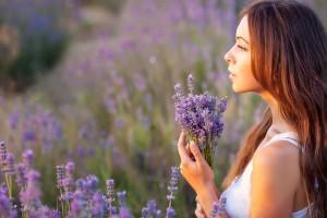 all purpose lavender