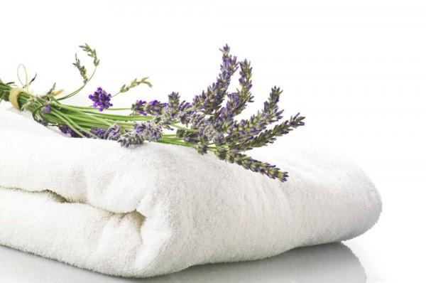 all purpose lavender_3