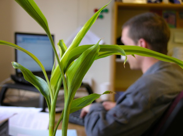 officeplant1