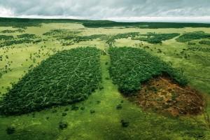 фильмы-об-экологии