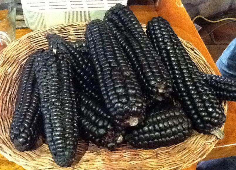 blue corn kukuruza