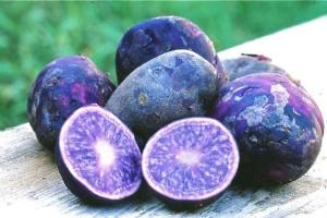 purple potato kartofel