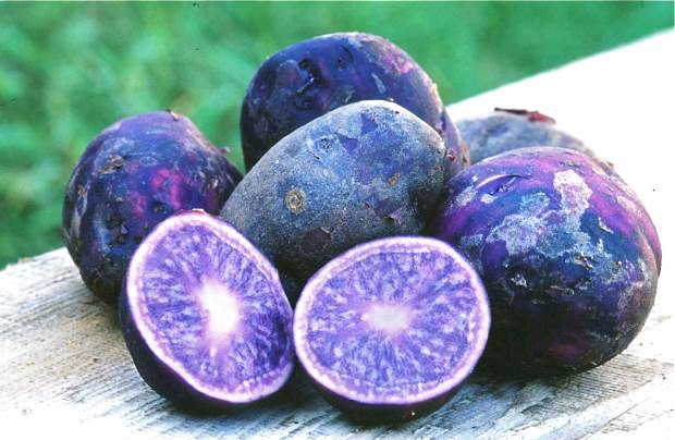 purple potato kartofel