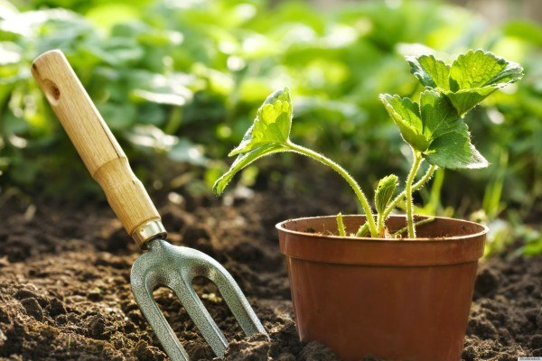 How To Make Your Organic Garden Grow Tips And Tricks