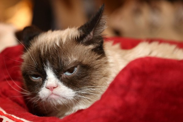 Grumpy cat sad depression