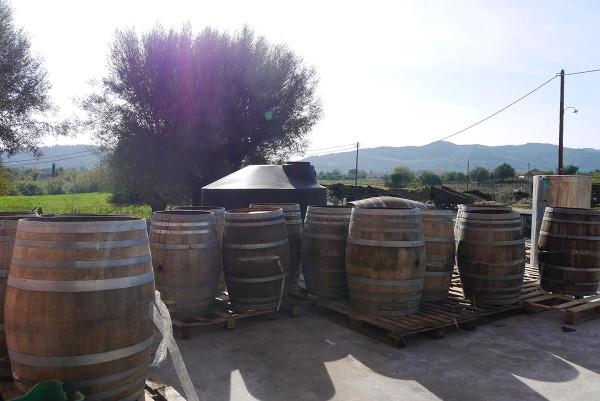 В винодельческом хозяйстве Brintzikis