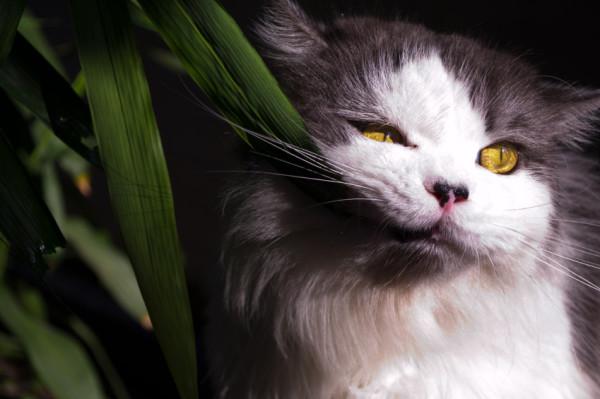 Poisonous-Plants-and-Your-Feline