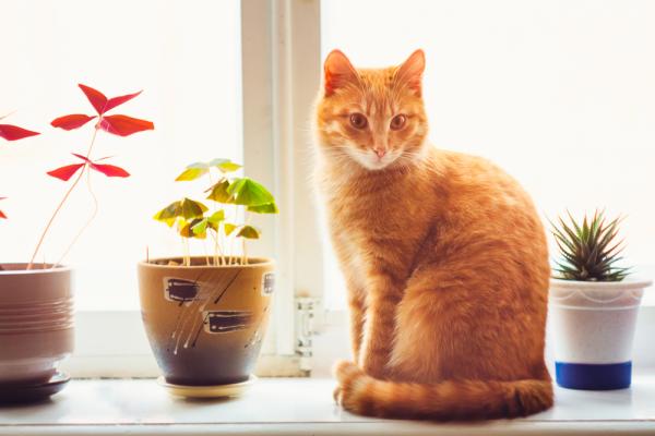 cat home plants