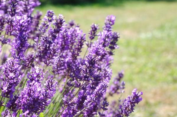 Фото с сайта www.tophdgallery.com