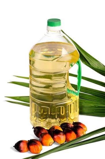 пальма2