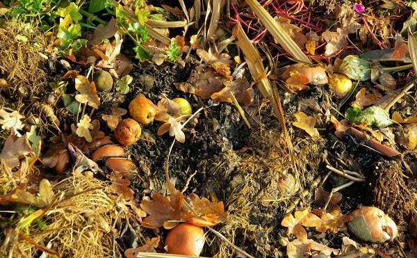 Фотография с сайта modernfarmer.com