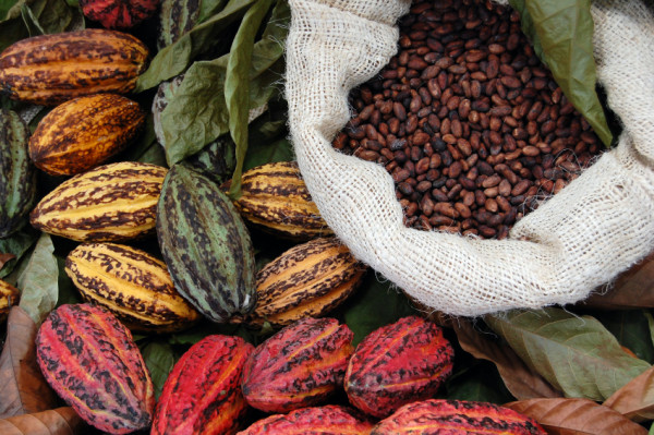 A-peek-at-Lindt-s-sustainable-cocoa-commitments