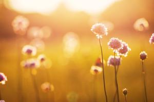 Лекарственных трав и растений