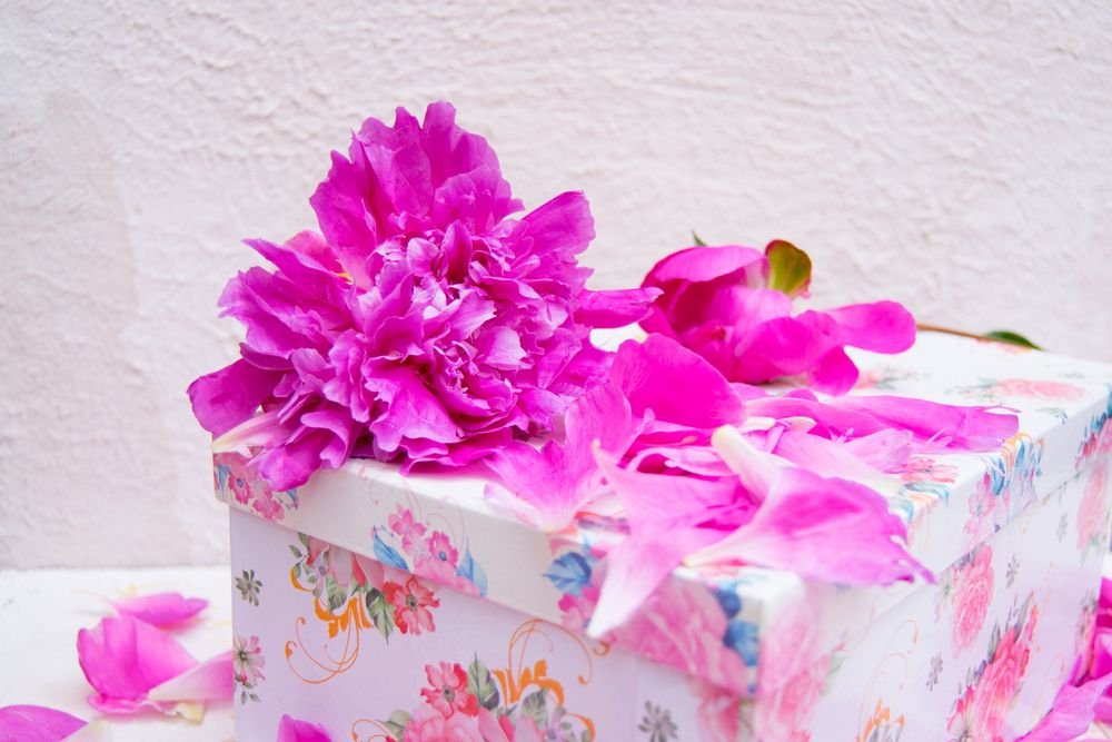 Gift box with petals of pink peony