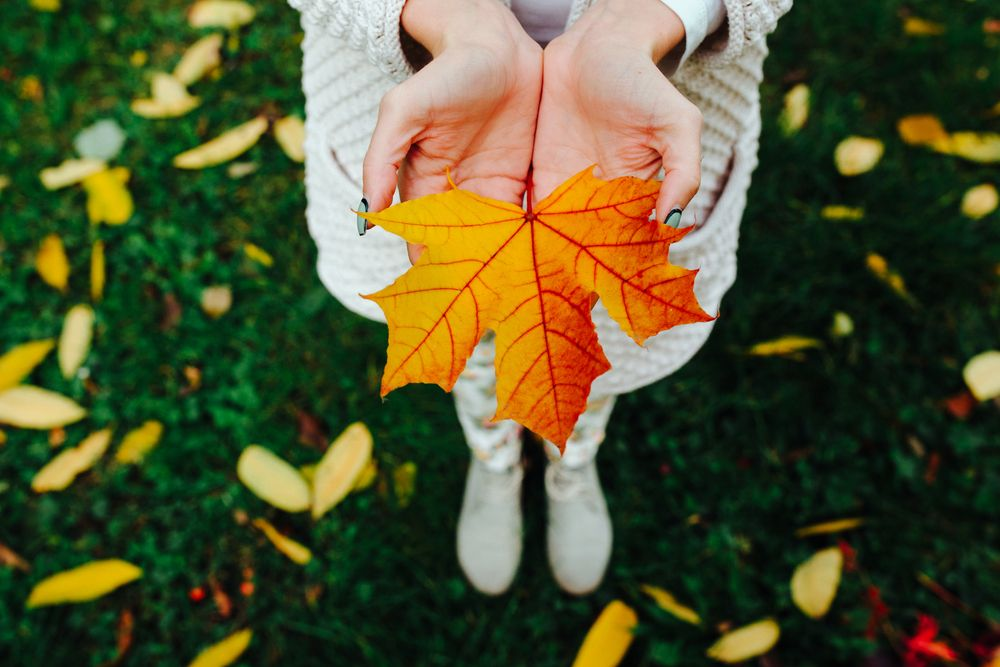 autumn-leaves-in-girl-hands-fall
