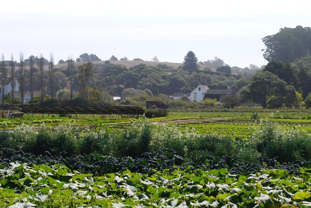 star route farm 3