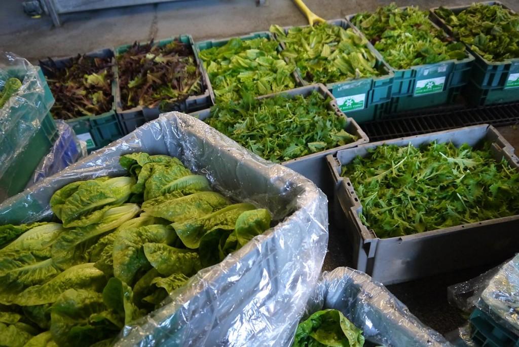 На ферме работает небольшой цех по помывке и резке салатов