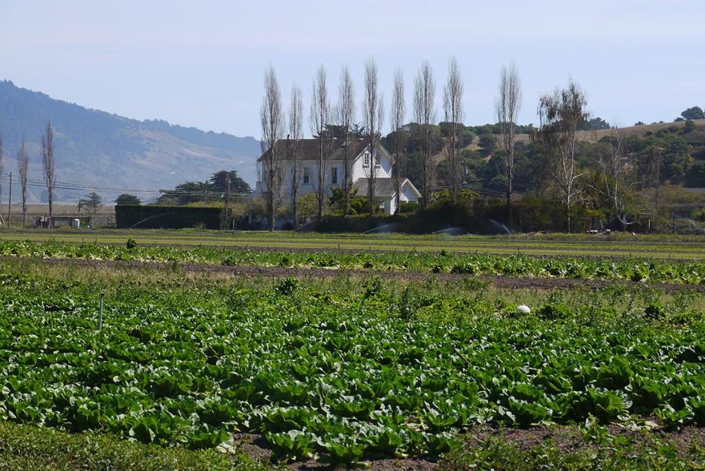Фермерский дом