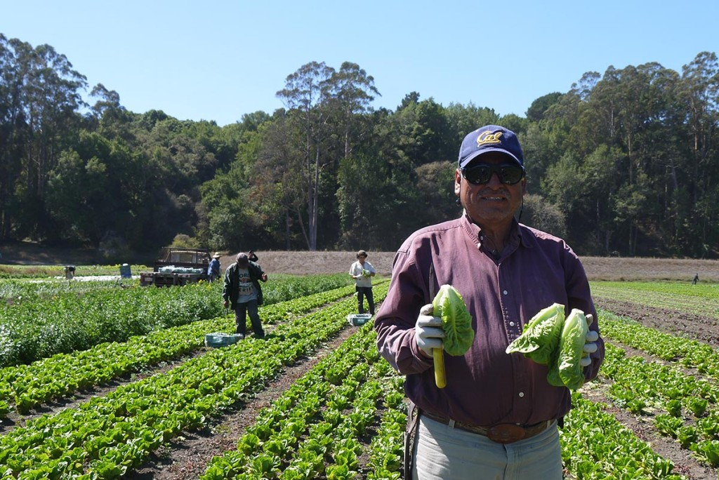 На ферме работает 25 человек, большинство - иммигранты из Мексики