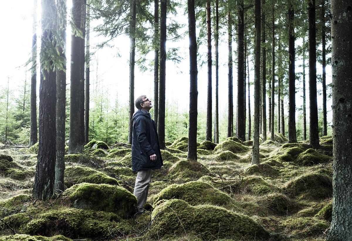 шведский лес