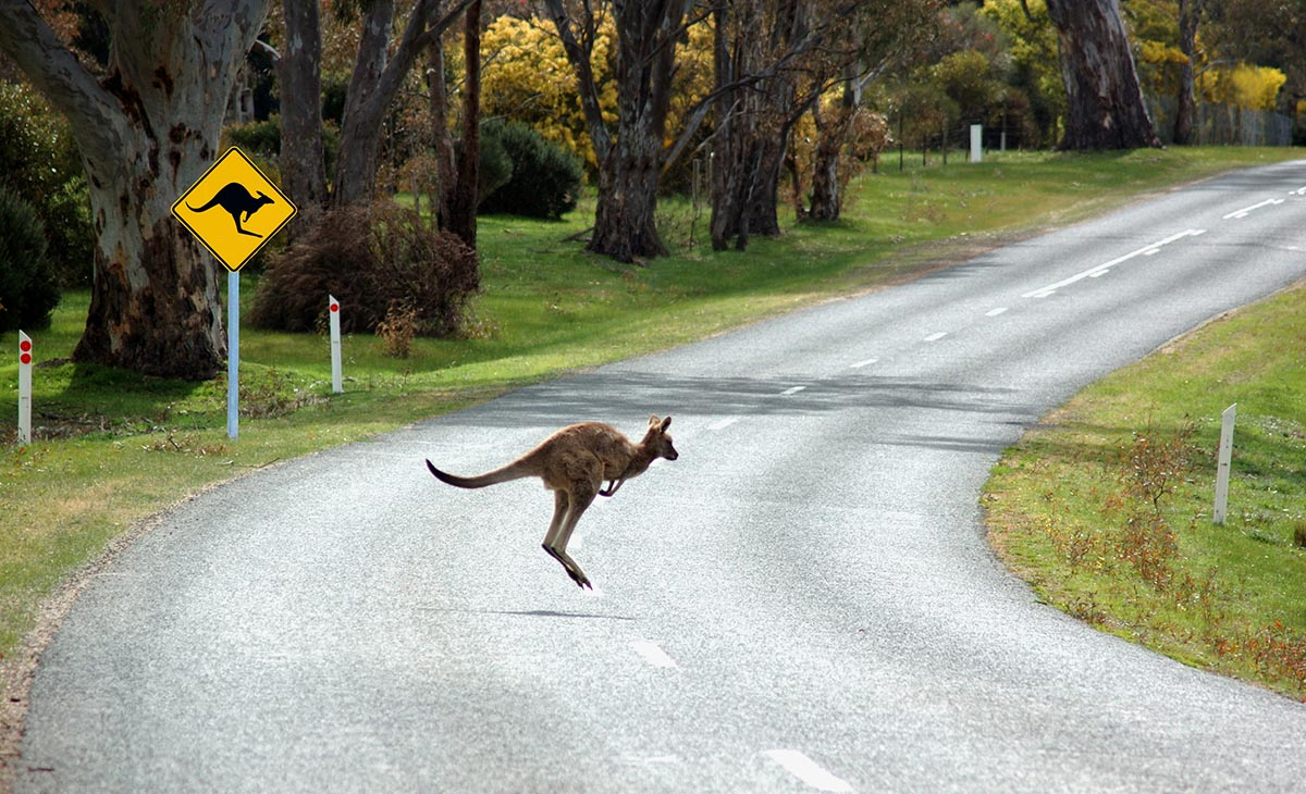 kenguru road