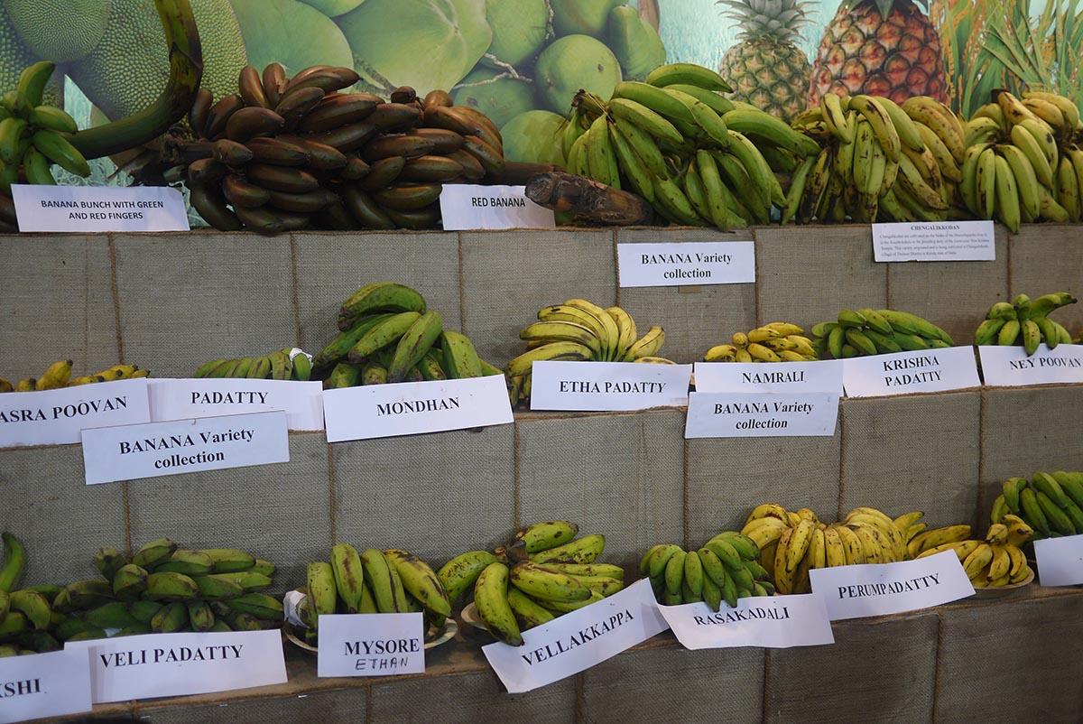 organic india 5