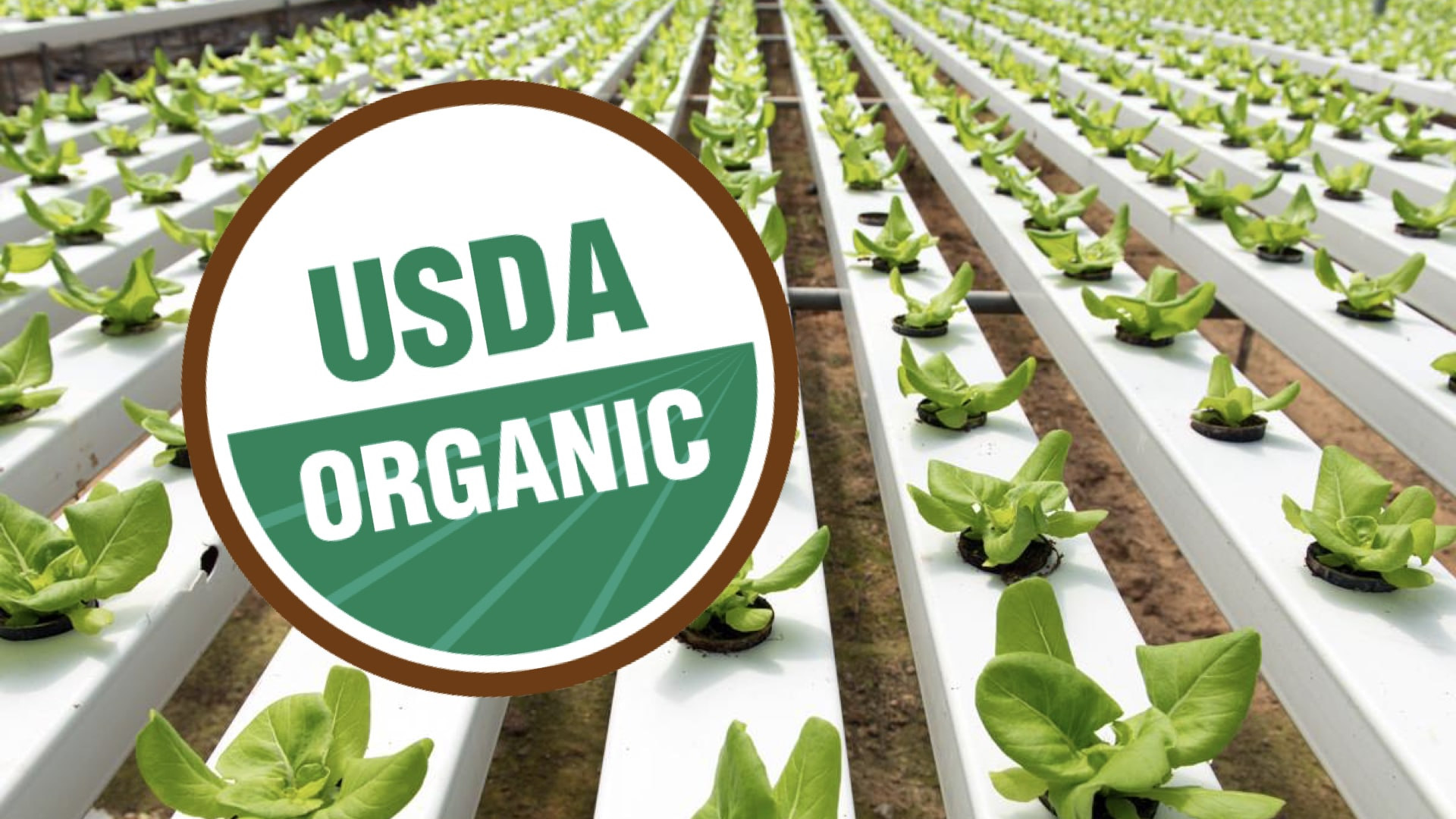 USDA-Organic-label-Hydroponic-II.jpeg.001-min