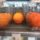 azbuka vkusa svobodu apelsinam