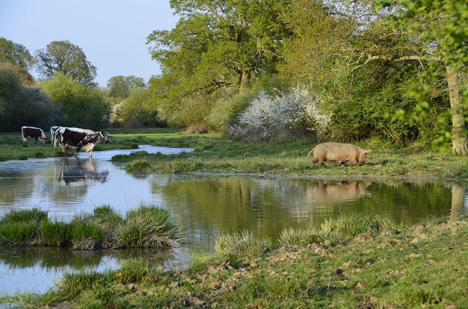 Izabella Tree rewilding ozero les zhivotnye priroda