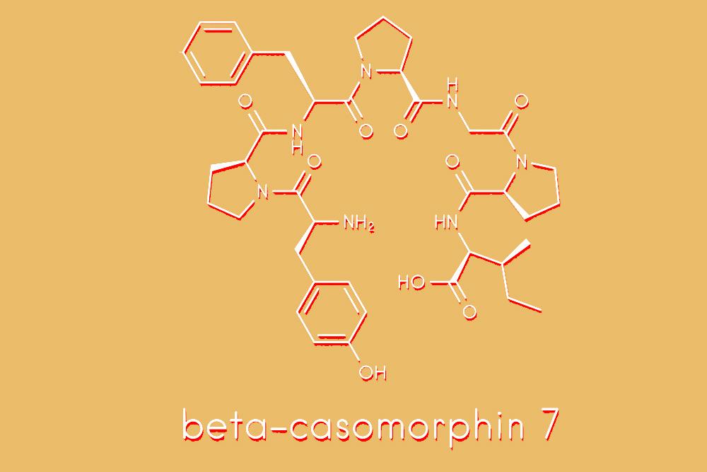 casomorphin casein formula himiya