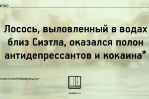 losos_vnezapno
