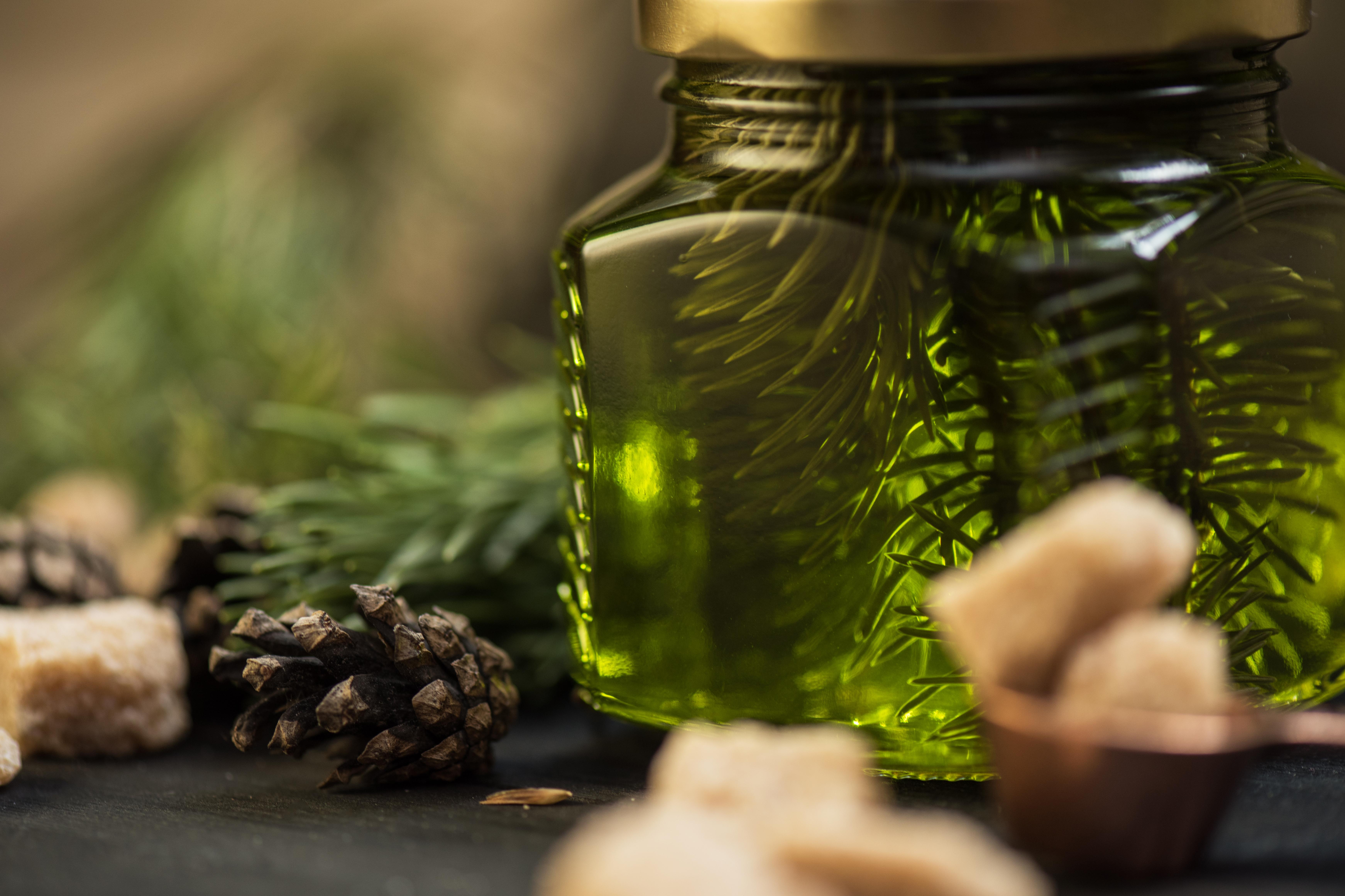 pine elka hvoya shishka green zeleniy eliksir extract