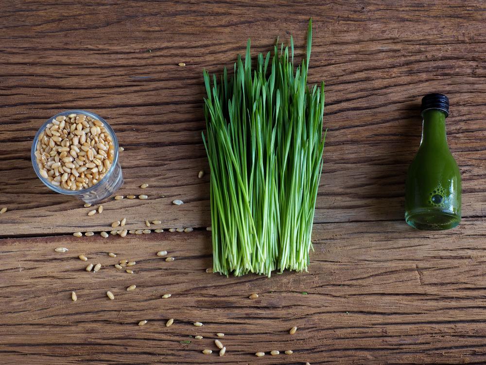 wheatgrass sok rostkov pshenitsy zeleniy cocktail