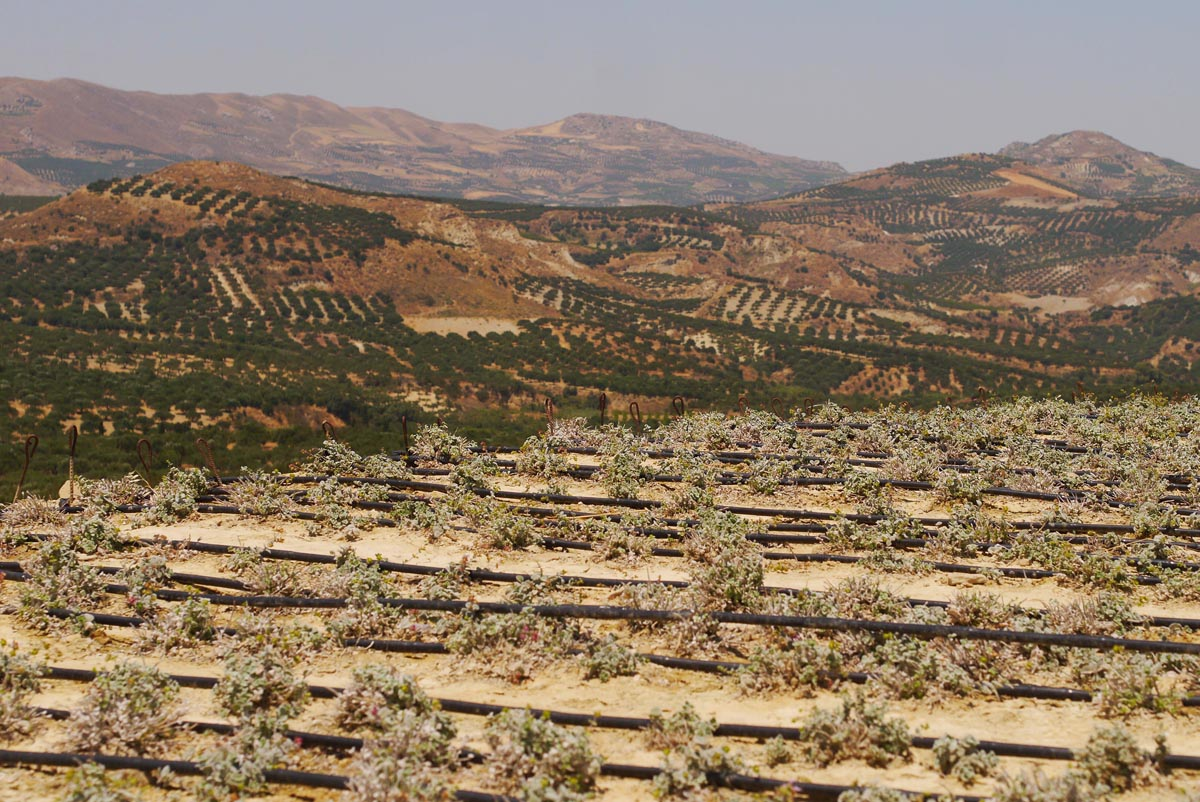 bioselect landscape
