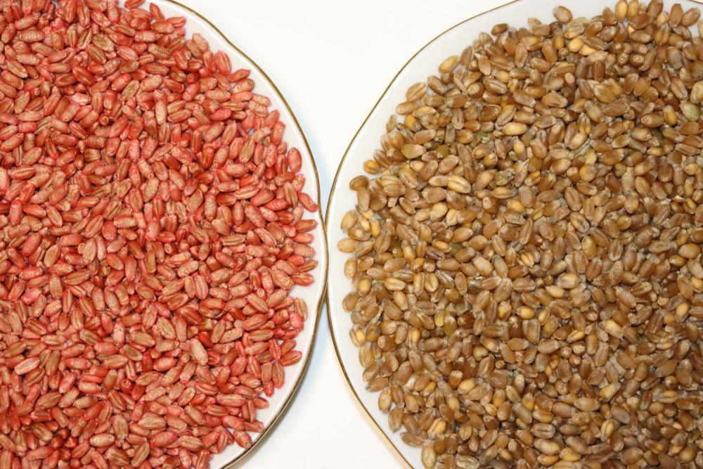 semena protravlennye