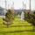 Волгоградская долина Grass