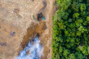 palmovoe maslo problema ekologii