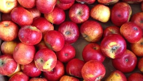 Польша: органические яблоки