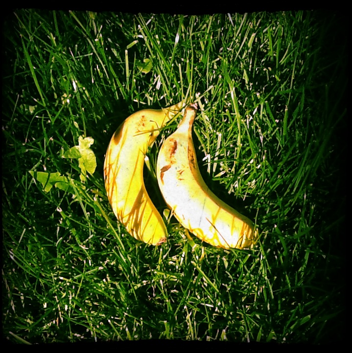 bananas in the grass