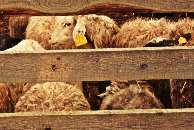 upd lukino ovza 1