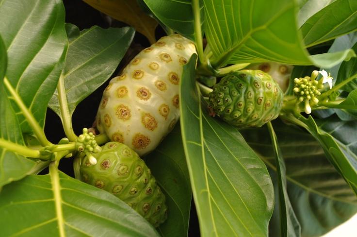 шелковица фрукт