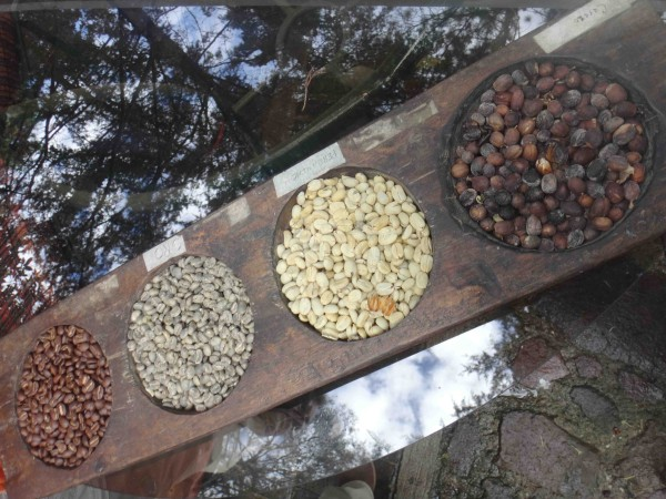 справа налево: сухие кофейные ягоды, высушенные зерна в мякоти, зеленые зерна, обжаренные зерна