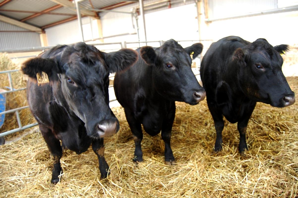агриволга коровы 2